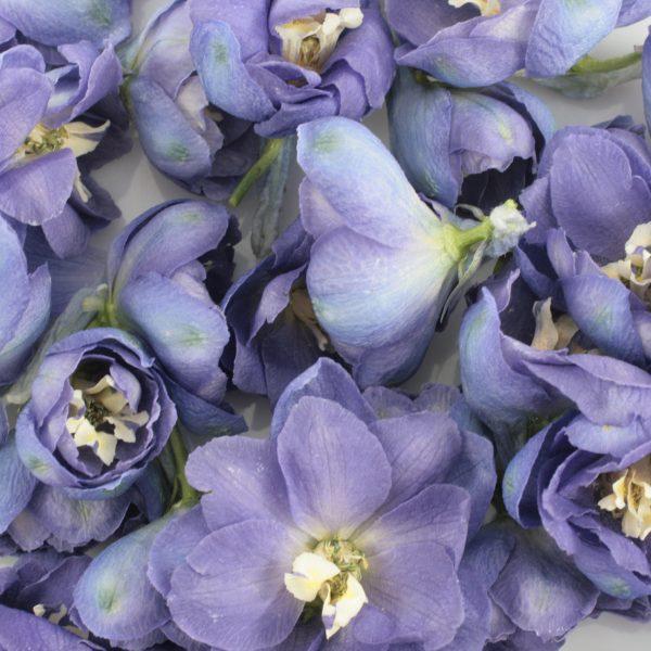 Delphinium Petals for a ashes ceremony