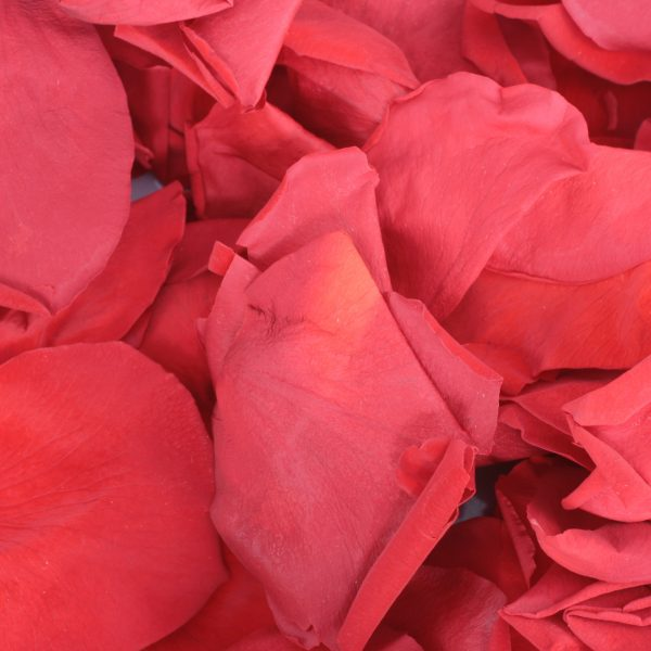 Pink Rose Petals for a ashes ceremony