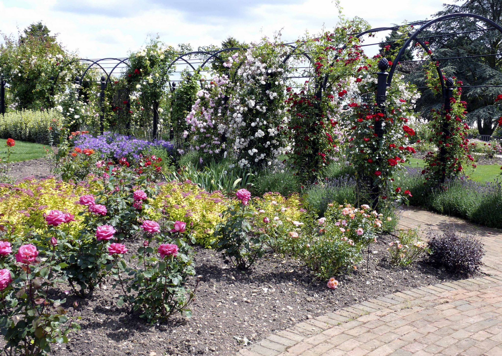 cremation ashes rose garden